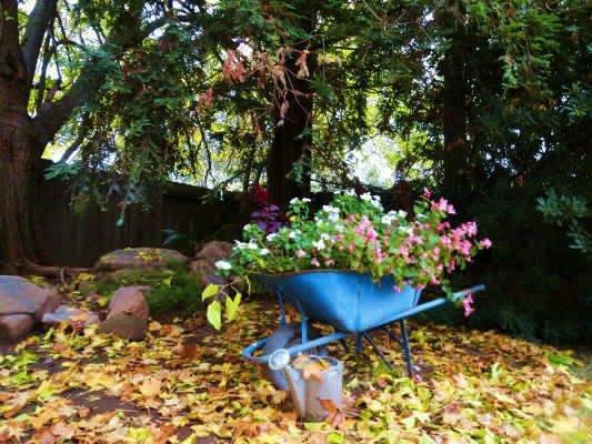 Fall or Spring,...no, December in California....