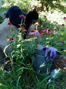 Weeding, again