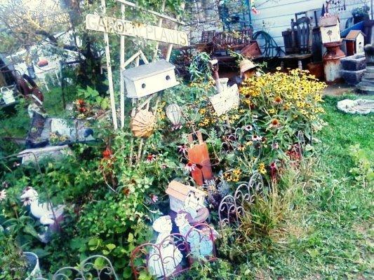 Debbie's rambling 'Memory Garden'