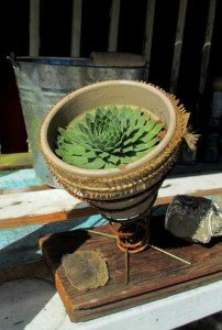 Old Springs bring new life to this succulent.