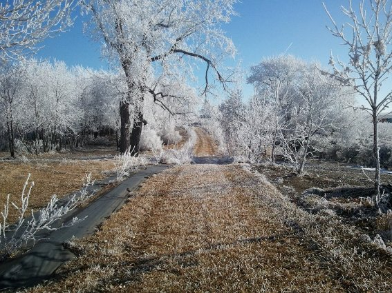 An icy driveway to Debra Clark's place.  See the spiral?
