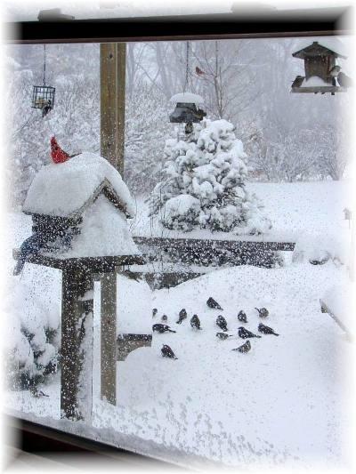 Jeanne Sammons's brilliant winter window view
