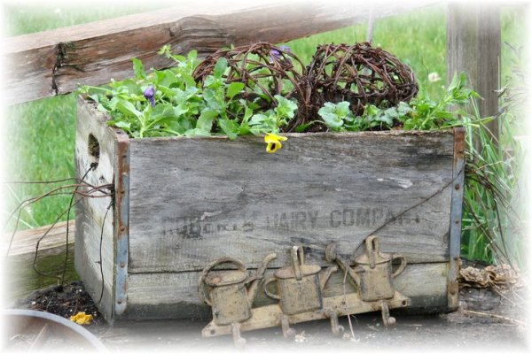 Jeanne Sammons's crate with plants