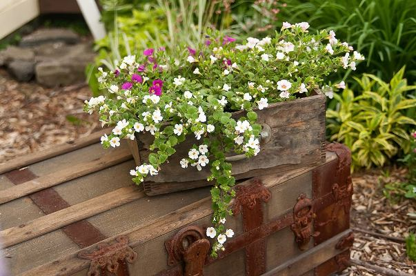 Jessica Eiss-Healthcoach's cleverly planted crate