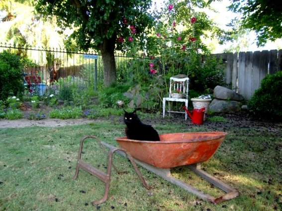 Jane Krauter's cat has tried to re-assemble this very old wheelbarrow