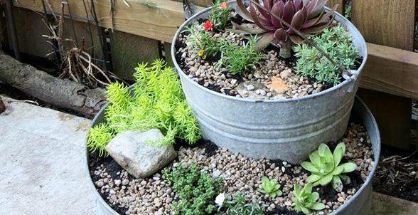 Jeanie's tiered succulent garden