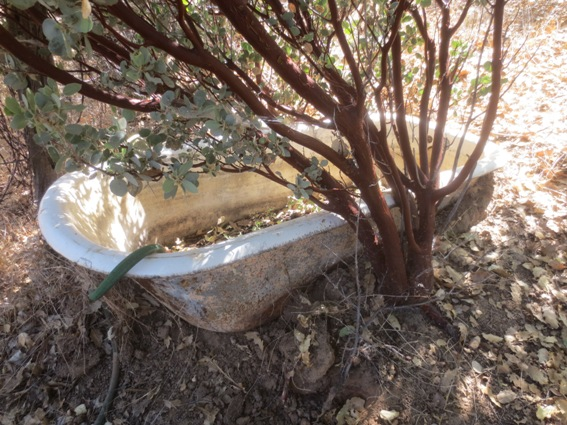 The tub was used as a goat water trough