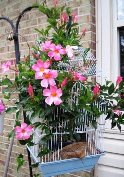 Jeanie Merritt's cage serves as a trellis for a blooming mandevilla vine