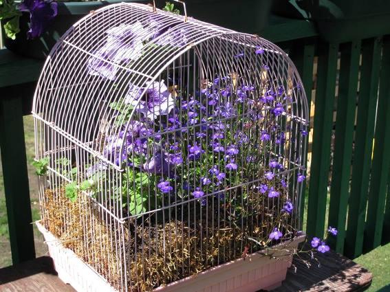 Priscilla Lepine's plants will grow right through the 'bars.'