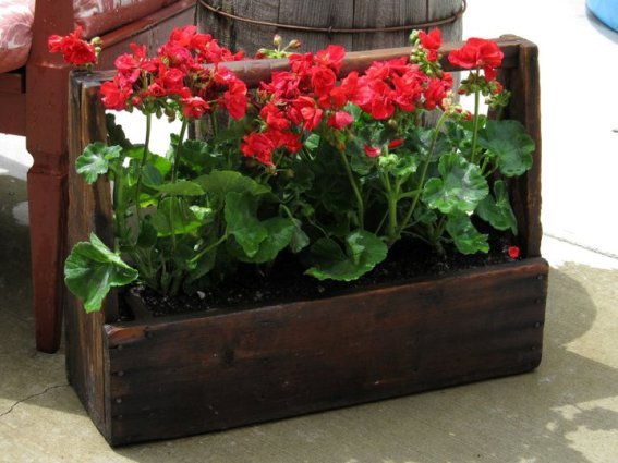 Kirk Willis's vibrantly planted wooden toolbox, with red geraniums