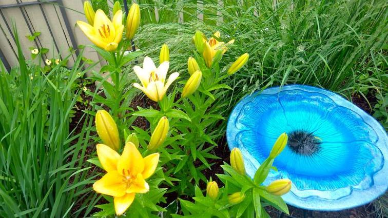 Layered glass birdbath