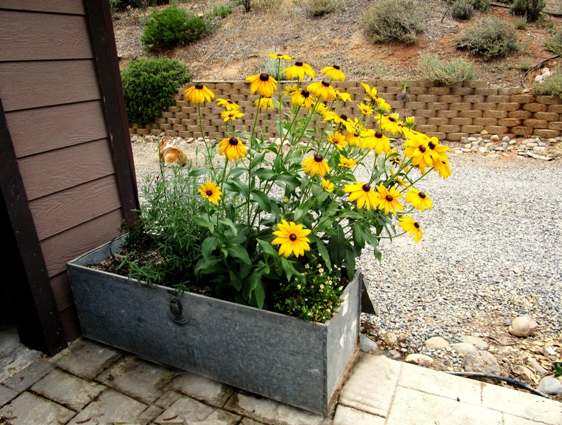 Toolbox planter jazzes up this corner!
