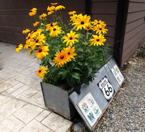 Tractor Man's tool box planter in July