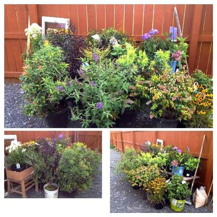 More plants slotted for the arbor