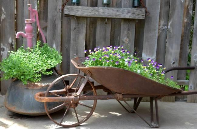 My wheelbarrow full of happy Johnny Jump ups self seeded from last year