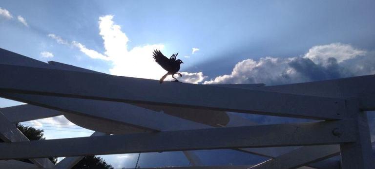 Toni's bird arbor-featured