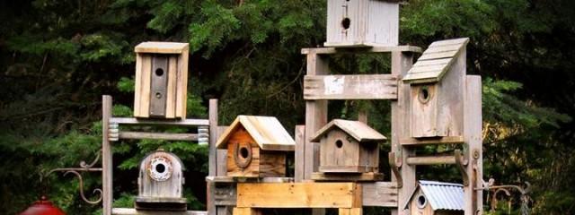 Kirk's bird house trellis