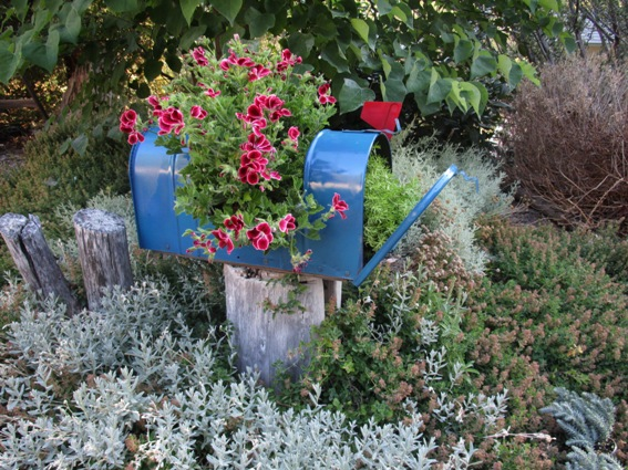I set the mailbox on a stump