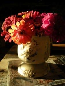 Billie Hayman's zinnias