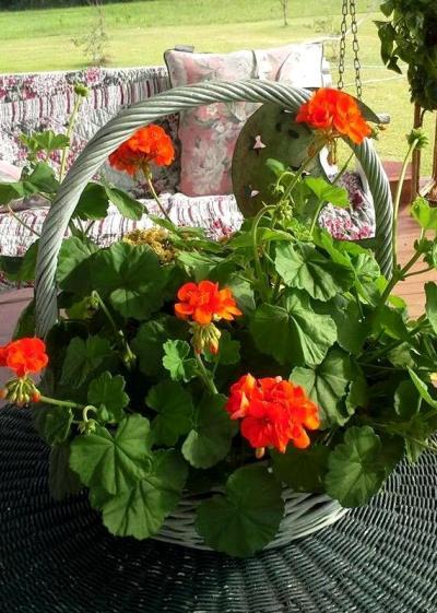 Billie's basket of orangey-red