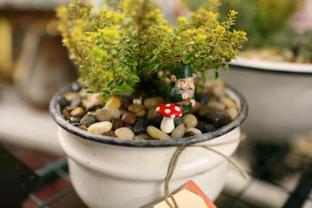 Joni Eades's tiny tiny garden in a cup