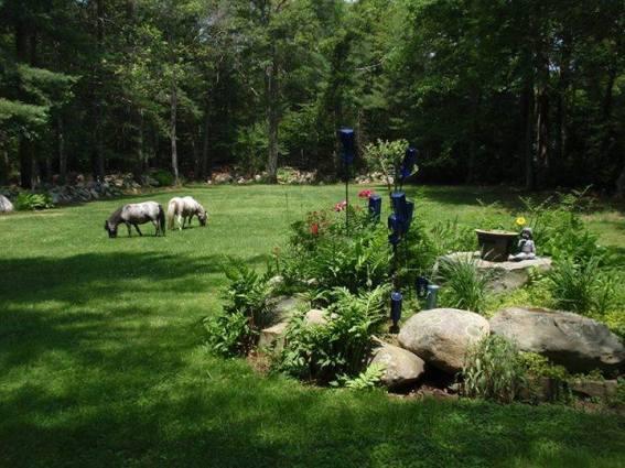 Mini horses trim the lawn