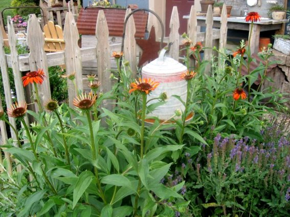 Tammy Prouty's rustic garden picket fence