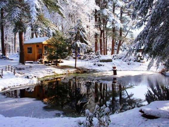View of the cabin across the pond