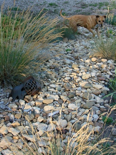 Jeanne Sammons' grassy stream bed