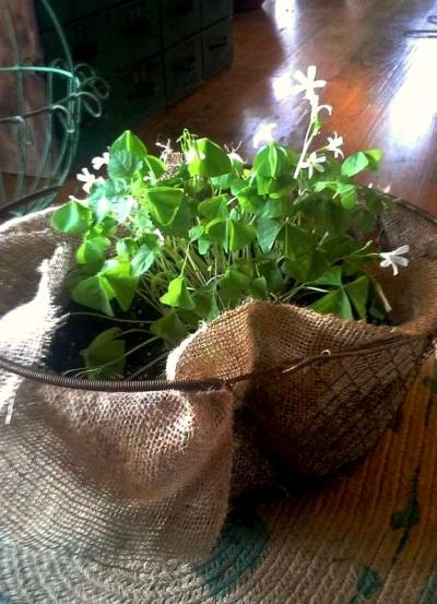 Billie Hayman lined a wire basket with burlap