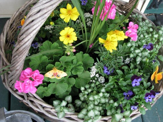 Catherine Lepage's heavy woven basket,..perfect for bright flowers