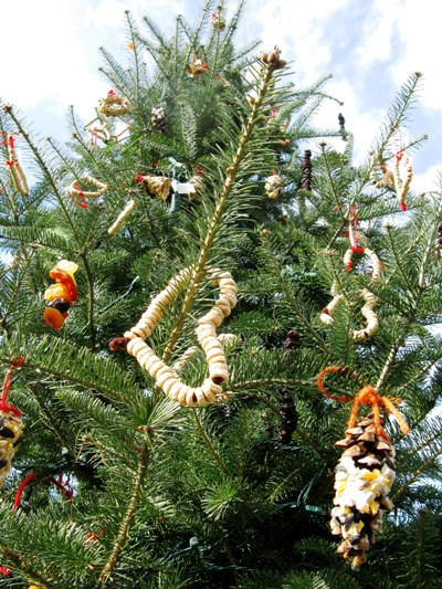 Decorate an evergreen tree