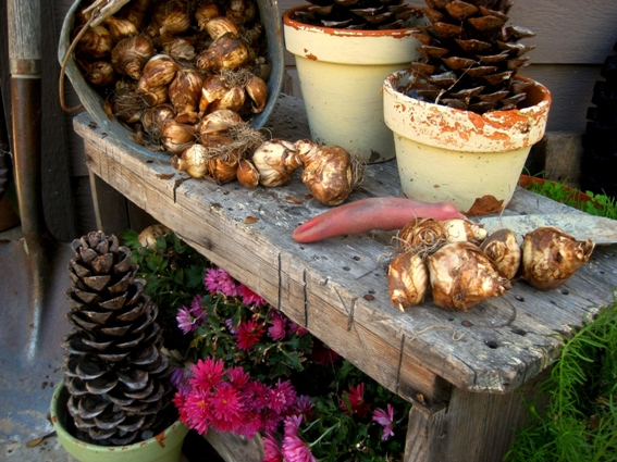 Plan ahead to plant bulbs