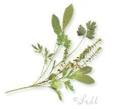 stephie herbs