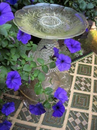 Jeanie Merritt 's perwinkle blue petunias