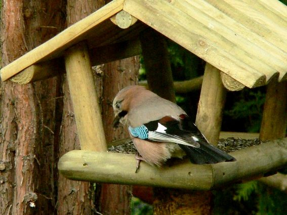 The construction detail on Bogdan's second feeder is shown on the wide roofs. A striking European Magpie sits on top.