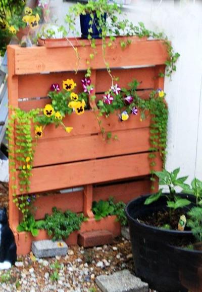 Cathy Cadd's verticla pallet planter