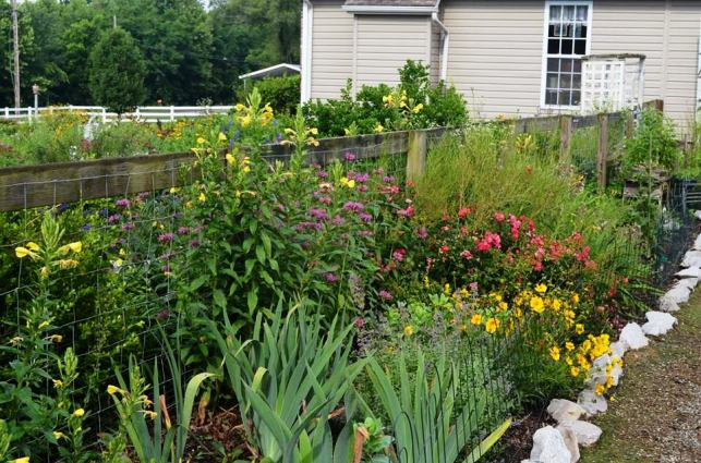 A fence divides the front and back gardens and serves as a trellis as well.
