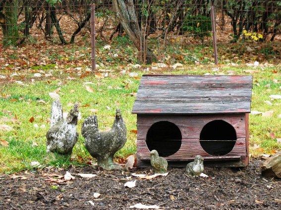 Shirley Carlen's chicken love