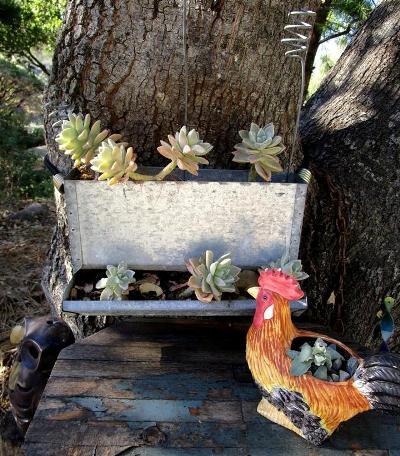 Sue Langley's chicken feeder