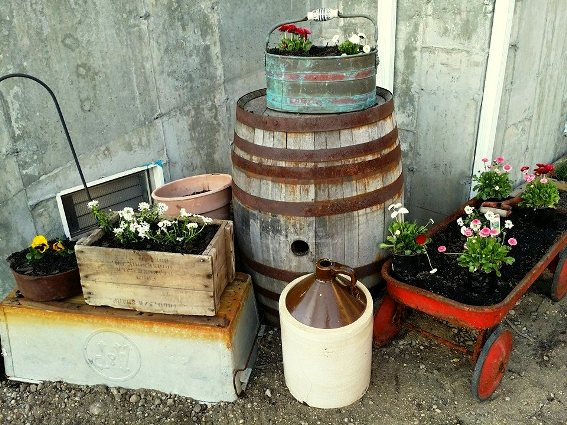 Georgianna Velard's ‎freshly planted containers