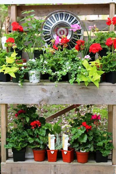 Karen Wilson ‎sets her plants on a pallet shelf ready to go