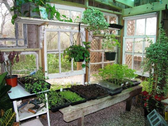 Valerie Haws's green house starts