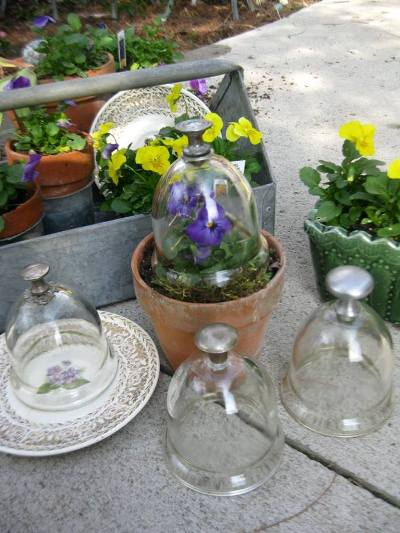 Mini cloches I made by drilling and adding knobs to candle cups