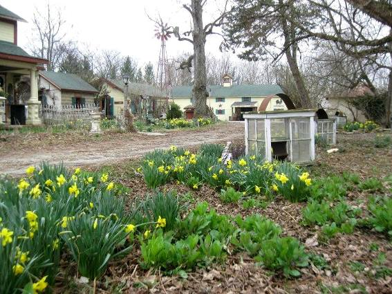 This bed features bulbs and spring wildflowers