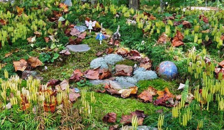 Anita's Enchanted Forest Garden