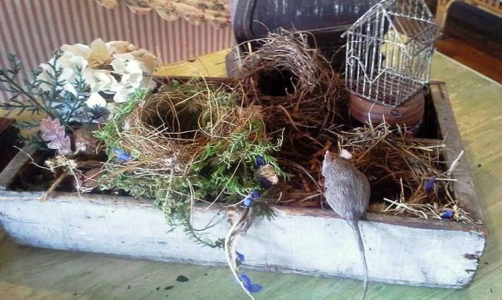 Billie Hayman's cute little nests