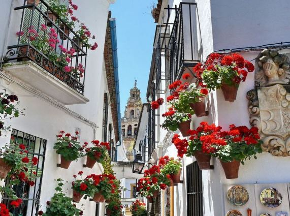 Geraniums say 'Vacation' in a sunny European climate