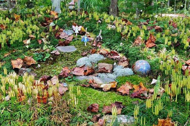 Turkey Foot Moss in the fairy garden