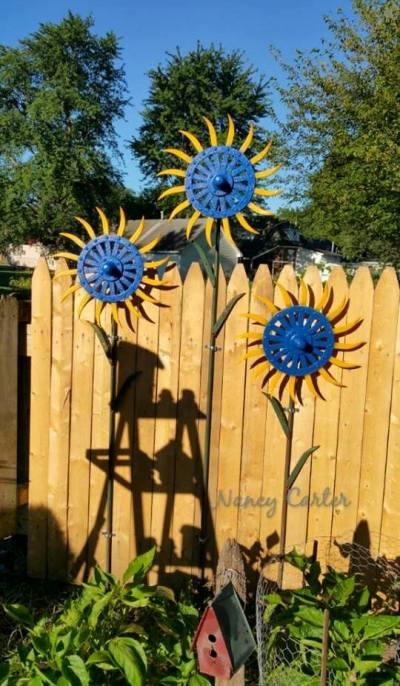 Nancy Carter's drought tolerant sunflowers